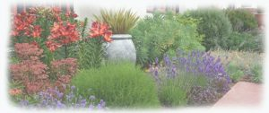 jardines-cistus